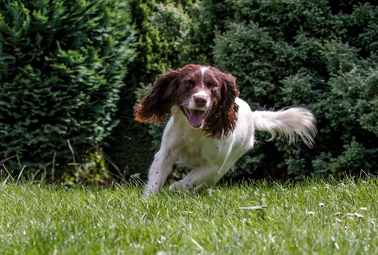 Stoneycairn Gundogs on The Country Gent Podcast